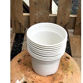 Bộ 10 chậu nhựa trồng cây kích thước fi 105 x 80 mm