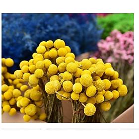 Bó 10 bông hoa khô hoàng kim