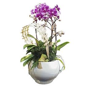 Bình hoa tươi - Hai Nửa Lưu Luyến 2867