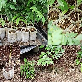 Combo 100Túi ươm hạt giống , Túi vải không dệt ươm hạt giống (8x10cm)