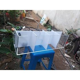 hồ nuôi cá betta, guppy ( bảy màu )  chia 4 ngăn. có vách lọc nước