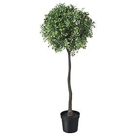 IKEA FEJKA Cây trồng trong chậu nhân tạo ngoài trời Hộp 15 cm Artificial potted plant in outdoor Box stem 15 cm
