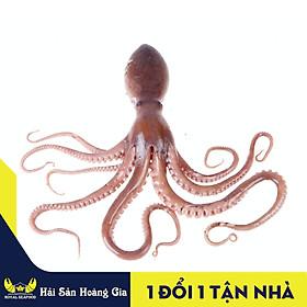 [Chỉ Giao HCM] - Bạch Tuộc Hải Sản Hoàng Gia, Giao Con Hàng Sống, Hàng Thiên Nhiên 100% Tặng Kèm Nước Chấm Siêu Ngon (1KG)