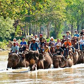 Vé Tham Quan Làng Voi Pattaya, Thái Lan - Một Giờ Trekking Cùng Voi (16:00 - 17:00)