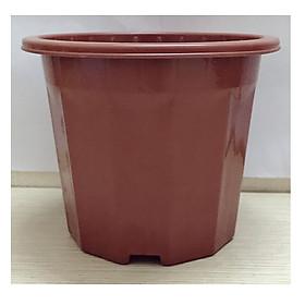 Hình ảnh 1 Chậu Nhựa Trồng Hoa, Cây Cảnh E230 CN
