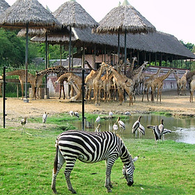 Vé Safari World Bangkok, Thái Lan - Package C: Safari Park + Marine Park + Show Thú