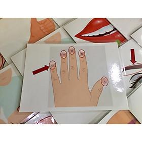 Body part Flashcards - Set 2: Advanced - Thẻ học tiếng Anh chủ đề Bộ phận cơ thể - Bộ 2 (mức độ khó) - 20 cards: ankle, palm, thumb, nail, chest, ...)