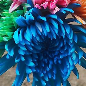 Nước Màu Nhuộm Hoa Tươi (5 Chai 100ml x 5 màu) giúp Học Sinh thực nghiệm đổi Màu Hoa tại trường học và tại nhà an toàn thuộc Công Nghệ Israel The Color Sodium