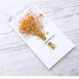 Thiệp Hoa Khô Trang Trí