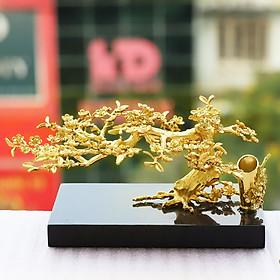 Cây hoa mai thế bonsai mạ vàng