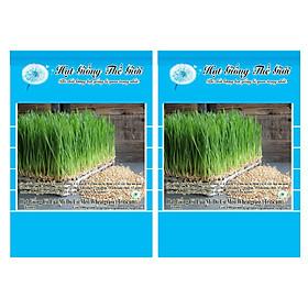 Bộ 2 Gói Hạt Giống Cỏ Lúa Mì Đỏ Cỏ Mèo Wheatgrass (Triticum aestivum) 100g