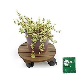Đế lót chậu hoa- Đế lót chậu cây có bánh xe chịu lực 80kg - Tặng kèm 1 gói dưỡng hoa tươi lâu