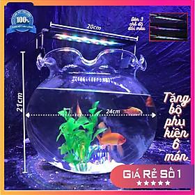 Bể cá mini tai bèo COMBO Hồ Đèn, châu cá thủy sinh tặng phụ kiện trang trí