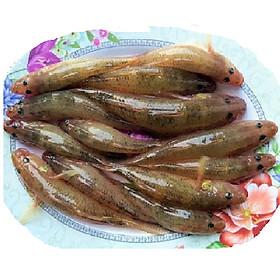 [Chỉ Giao HN] - HSPQ - Cá bống vàng làm sạch (400gram)