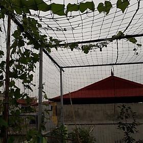 Lưới Trồng Cây, Lưới Giàn Leo Cho Cây 2m x 5m