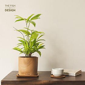 Chậu cây trúc nhật | THE FISH SIZE L ( trang trí trong nhà, để bàn làm việc,...)