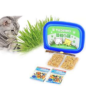 Bộ trồng cỏ tiêu búi lông cho mèo