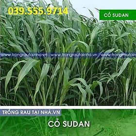 Hạt cỏ Chăn Nuôi Sudan Lai 200g - Cỏ Chăn Nuôi Không Lông
