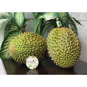 [Chỉ Giao HCM] - Sầu riêng Ri6 chín tự nhiên (trái 2.5kg - 3kg)