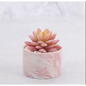 Chậu cây hoa giả hình trụ đá cẩm thạch hoa sen đá Rubi 8x10cm