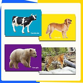 Thẻ Flash Card Thông Minh Bé Nhận Biết Thế Giới Động Vật -  Kích thước 11 x 16 cm, In 2 Mặt Dành Cho Bé Từ 3 - 6 Tuổi (30 Thẻ)