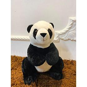 Gấu Trúc Panda Nhật Amuse