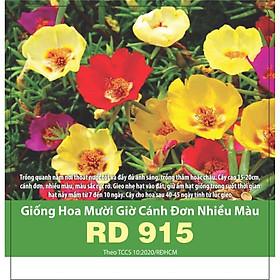Hạt giống Hoa Mười Giờ Cánh Đơn Nhiều Màu RD 915, Hoa Nở Liên Tục Mỗi Ngày - RẠNG ĐÔNG, HẠT GIỐNG TỐT