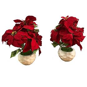 Combo hoa trạng nguyên vải nhung đỏ PT0216
