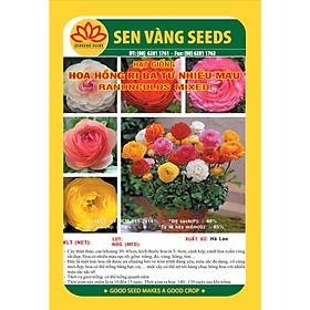 02 gói Hạt giống hoa hồng ri Ba Tư Hà Lan nhiều màu VTS06