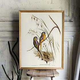 Tranh Canvas treo tường chim Euphema - B014