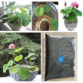 Đất Bùn Trồng Sen - 2.5kg - Bùn trồng sen mini nhật