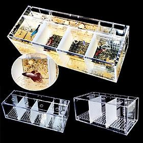 Khung bằng chất liệu acrylic trong suốt dùng trang trí hồ cá