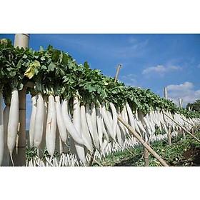 Bộ 1 gói hạt giống Củ Cải Trắng-50g