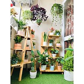 Kệ để chậu hoa cây cảnh trong nhà gỗ thông tự nhiên kích thước 80cmx50X25CM