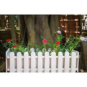 Chậu Trồng Cây Hàng Rào TH Garden - Size To 47x22x17cm - Hàng Loại 1 Dày, Bóng Đẹp - Chậu Nhựa Trồng Hoa Composite