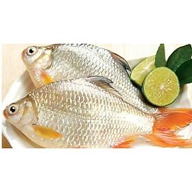 [Chỉ Giao HN] - Cá diếc - 500gram