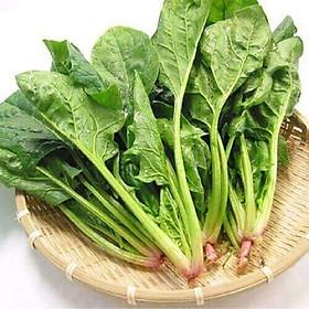 Bộ 1 gói Hạt giống rau bó xôi chịu nhiệt