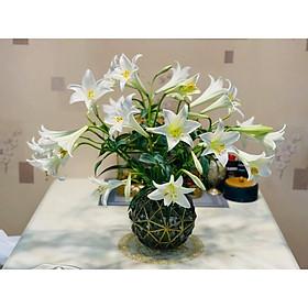 Bình hoa thuỷ tinh trụ tròn đẹp cắm hoa cao cấp Decor trang trí nhà cửa