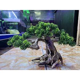 Cây bonsai mini trang trí hồ cá, size nhỏ và size lớn.