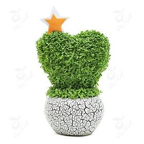 Bộ 1 gói Hạt giống cỏ may mắn
