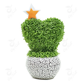 Bộ 10 gói Hạt giống cỏ may mắn