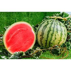 [Chỉ Giao HCM] - Dưa hấu ruột đỏ không hạt (3 - 5 kg/trái)