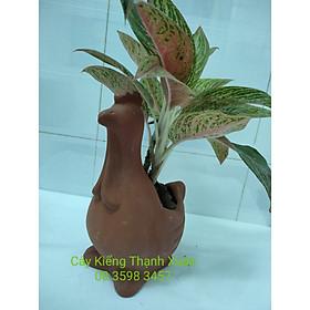 Chậu trồng cây, chậu đất nung hình Con gà, Chậu hình thú trồng cây hoa kiểng, sen đá, xương rông, cây may mắn, cây mini