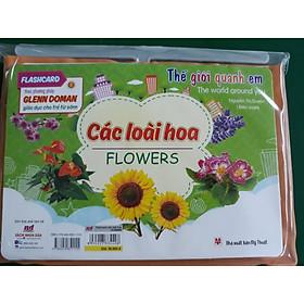 Flashcard thế giới quanh em - Các loài hoa