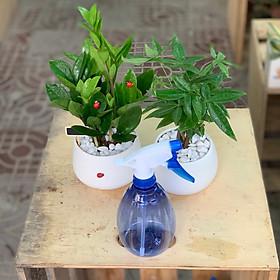 Combo: cây Kim Tiền, cây Kim Ngân, bình tưới cây