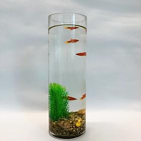 Bể cá thủy tinh mini để bàn dáng cao đầy đủ phụ kiện - 30cm
