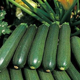 Bộ 1 hạt giống bí ngồi xanh