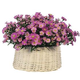 Giỏ hoa tươi - Violet 4363
