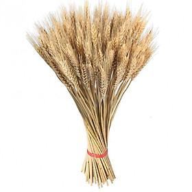 Hoa lúa mạch khô trang trí 500g