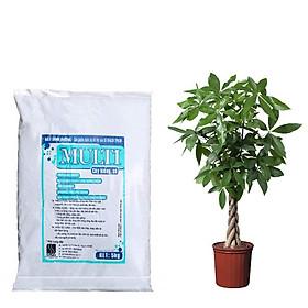 Đất trồng hoa, cây kiểng Multi -Trồng trên luống, chậu, bồn- cung cấp đầy đủ chất dinh dưỡng cho cây trồng - 5kg